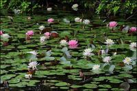 五月の小呂池 - 薫の時の記憶