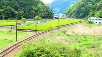 緑の中を走るよ - 長い木の橋