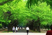 都立光が丘公園 - お散歩写真     O-edo line