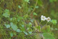 花巡りwalk①**花の宝庫・帝釈峡 - きまぐれ*風音・・kanon・・