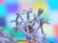 春の花 9 - ty4834 四季の写真Ⅱ