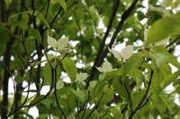 鳥とお花とホットオレンジジュース - ミセス サファイア 静けさの中で