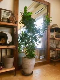 植物たちのお引越し - ONE MORE ALOHA  with pau~私の作業部屋~