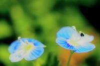 春の花 10 - ty4834 四季の写真Ⅱ