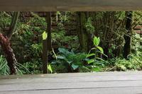 猫目線 - お庭のおと