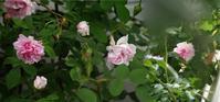 無気力の日々にも花は咲く - hibariの巣