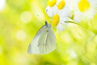 春の妖精は優雅です - スポック艦長のPhoto Diary