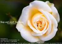 fpとわたくし。写真に対する純度。SIGMA fp + 70mm F2.8 DG MACRO | Art 作例#Sigmafp - さいとうおりのおいしいとかわいい
