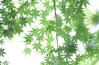 green  gradation - 写真の記憶