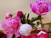 薔薇の香りで、芍薬が満開に! - ゆうゆう素敵な暮らしの手帖