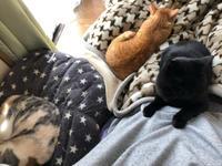 モーニング市場 - 愛犬家の猫日記