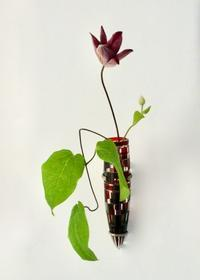 French Hanging Vase RED No.3 - GALLERY GRACE ギャラリーグレース BLOG