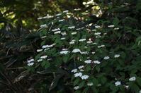 里山歩けば・・・(白い花) - きょうから あしたへ その2