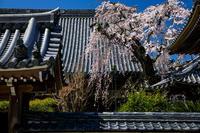 2020桜咲く奈良偶然見つけたお寺にて(吉野郡下市) - 花景色-K.W.C. PhotoBlog