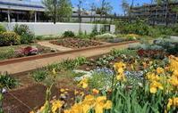 サークル花壇を模様替え2020年5月中旬のマンション花壇 - ニッキーののんびり気まま暮らし