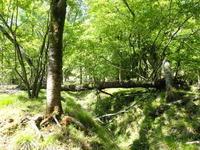 森の整備 - くつきの森フォトレター
