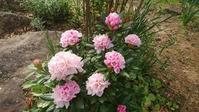 今週の庭♪ - 今から・花