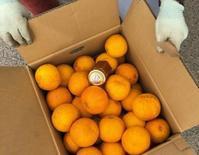 喜んでナルト蜜柑頂きましょう - 島暮らしのケセラセラ