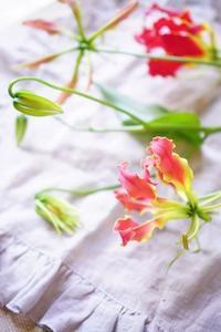 あのひとの好きなお花&お知らせ - お花に囲まれて