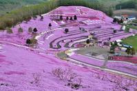 芝桜② - Photo Of 北海道大陸