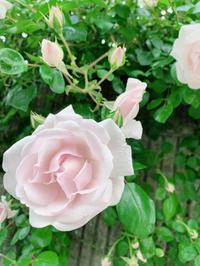 本当の幸せをゼロから考え直す - aminoelのオーナーブログ(笑光輝)キラキラ☆