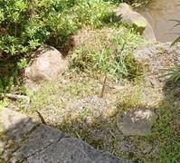 今はまだ黒くありません - 金沢犀川温泉 川端の湯宿「滝亭」BLOG