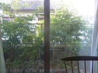 庭。 - 平野部屋