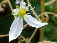 庭に咲くいろいろな花 - 花と葉っぱ
