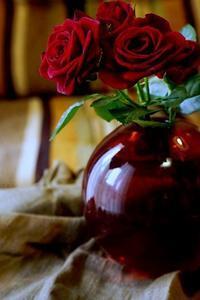 騒音苦情に感謝 - お花に囲まれて