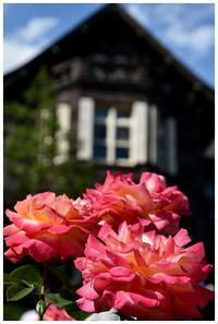 5色のバラ -  one's  heart
