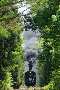 グリーントンネル - 蒸気屋が贈る日々の写真-exciteVer