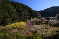 2020桜咲く奈良貝原の桃源郷 - 花景色-K.W.C. PhotoBlog
