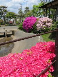 躑躅やサツキが美しい庭園 - 活花生活(2)