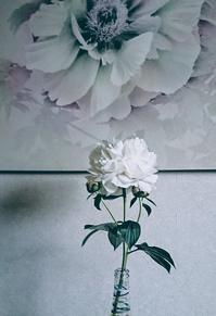 白の芍薬 - Loveletters