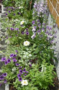 植え込みと芝はり - 花温♪ のblog