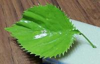 第九作ヤマトシジミの求愛シソの葉の製作 - むしジオラマ -ほか自分流園芸、自分流工作など-