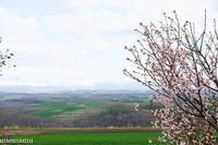 桜と山並み~5月の就実の丘 - My favorite ~Diary 3~
