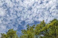 草刈りの合間を縫って。 - 四季燦燦 癒し系~^^かも風景写真