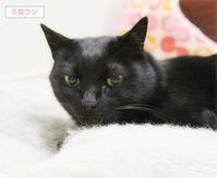 猫の寝方それぞれ - ちいさなチカラ