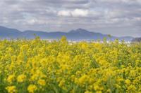 春の黄色い花 - katsuのヘタッピ風景