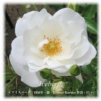 バラの季節-20 [バラ図鑑] Vol.9 - 感性の時代屋 Vol.3