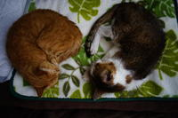 チコにお昼寝時流して良いと許可をもらった曲シリーズ #6 - COMPLEX CAT