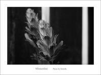 ツインズ - Minnenfoto
