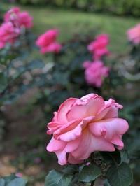 今月はセール開催月です - RoseBijou-parler゚・*:.。.