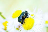 乙女チックトーンで昆虫を撮影 - スポック艦長のPhoto Diary