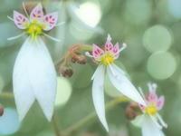 春の花 16 - ty4834 四季の写真Ⅱ