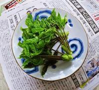 コシアブラの混ぜ御飯の話 - 蛙声雑記 (From August 1, 2020)