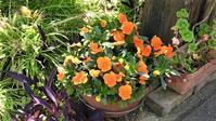 藤田八束博士の新型コロナ対策@春が近くまでやってきています、春がきっと元気を届けてくれます、花を植えませんかベランダに、部屋でもいい・・・春は幸せを持って来る - 藤田八束の日記