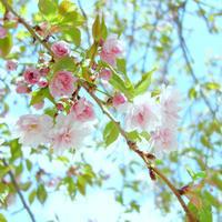 Spring - ∞ infinity ∞