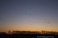 3月の渡り鳥 - ekkoの --- four seasons --- 北海道